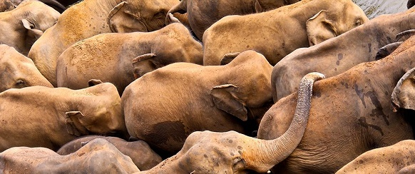 National Geographic's photo of the day: 23rd December National Geographic's photo of the day: 23rd December elephant orphanage sri lanka 74380 990x7421
