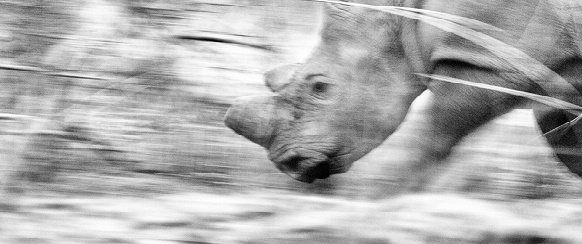 """National Geographic's photo of the day:20th December"" National Geographic's photo of the day: 20th December National Geographic's photo of the day: 20th December rhinoceros matopos zimbabwe 74383 990x7421"