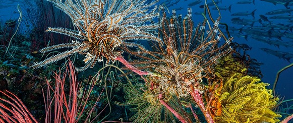 National Geographic's photo of the day: National Geographic's photo of the day: 2nd January National Geographic's photo of the day: 2nd January feather stars australia 74631 990x7421