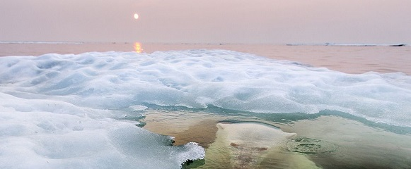 National Geographic's photo of the day: 7th January National Geographic's photo of the day: 7th January polar bear hudson bay 74620 990x7421