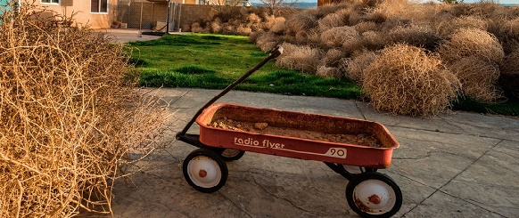 National Geographic's photo of the day: 10th January National Geographic's photo of the day: 10th January tumbleweeds yard california 74621 990x7421