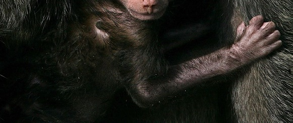 National Geographic's photo of the day: 11th February National Geographic's photo of the day: 11th February baby baboon kenya 76008 990x7421