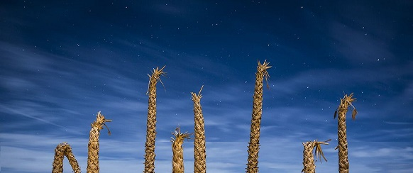 """National Geographic photo of the day"" 26th March National Geographic's photo of the day: 26th March National Geographic's photo of the day: 26th March desert palms california 77419 990x7421"
