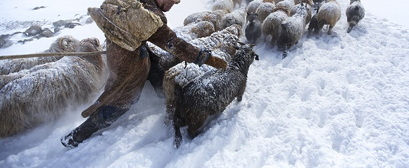 """National Geographic photo of the day: 19th March"" National Geographic's photo of the day: 19th March National Geographic's photo of the day: 19th March shepherd altai mongolia 77428 990x7422"