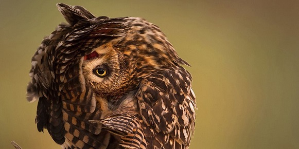 """National Geographic photo of the day: 14th May"" National Geographic's photo of the day: 14th May National Geographic's photo of the day: 14th May owl stretching reserve kuwait 79192 990x7421"