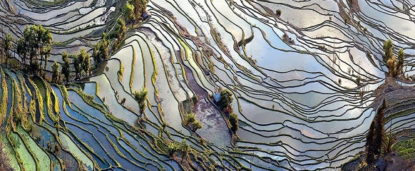 National Geographic's photo of the day: 5th May National Geographic's photo of the day: 5th May rice terrace landscape china 79195 990x7421  Home rice terrace landscape china 79195 990x7421
