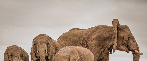 National Geographic's photo of the day: 23rd June National Geographic's photo of the day: 23rd June elephant herd mashatu botswana 80559 990x7421