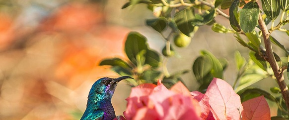 National Geographic's photo of the day: 1st July National Geographic's photo of the day: 1st July palestine sunbird galilee israel 81120 990x7421